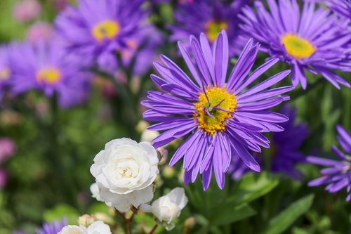 rock plant  purple  blue