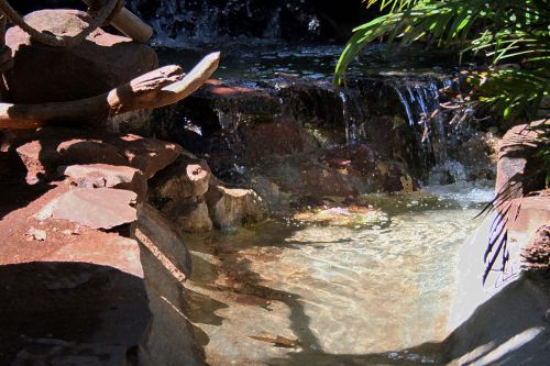 Rock Pool With Plants