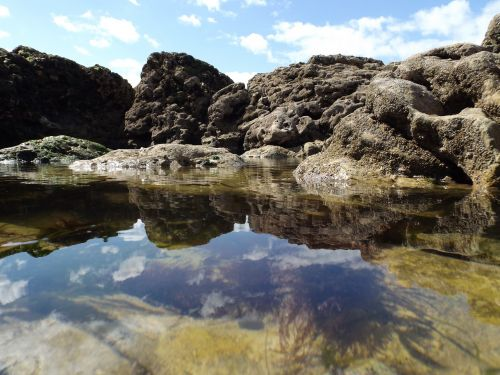 rock pools seashore sea