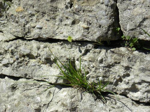 rock wall grass close-up