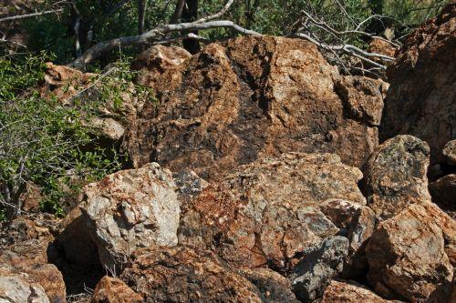 Rock With Vegetation