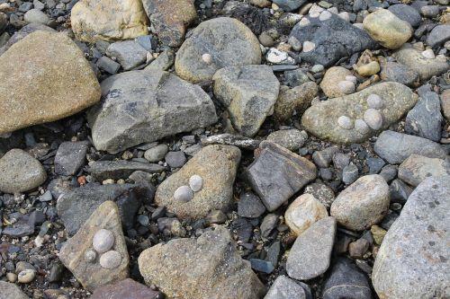 rocks sea shells seashore