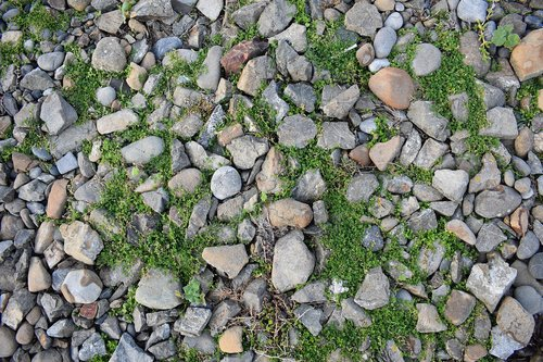 rocks  beach  surface