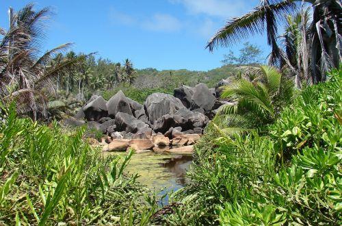 rocks tropic nature