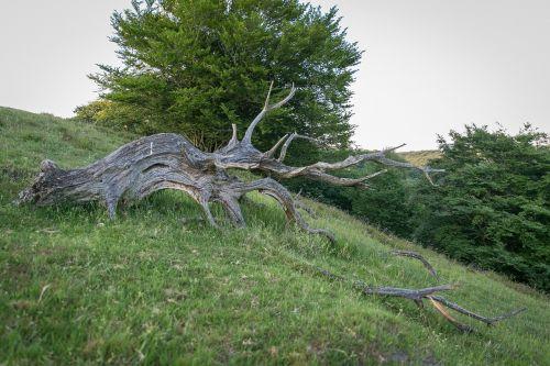 rod old wood