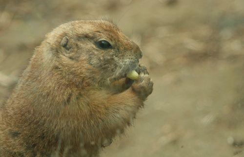 rodent munch eat