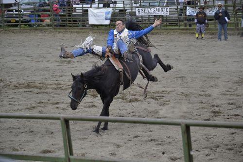 rodeo horse alaska