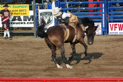 rodeo horse horseback