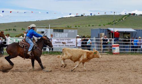 rodeo calf roping arena
