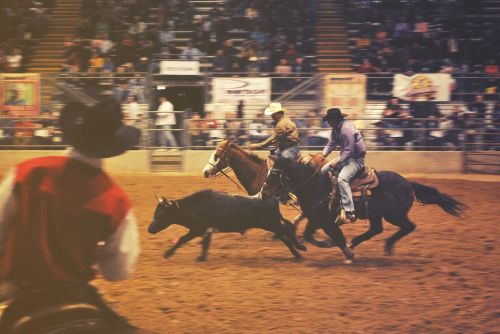 rodeo horses cowboys
