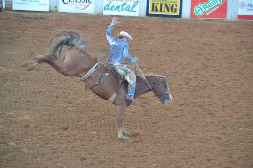 rodeo cowboy horse