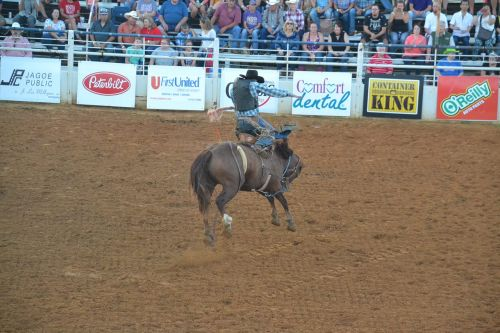 rodeo horse bronco