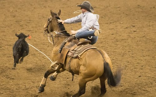 rodeo  horse  competition
