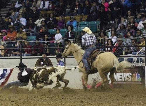 rodeo  calf  bulldogging