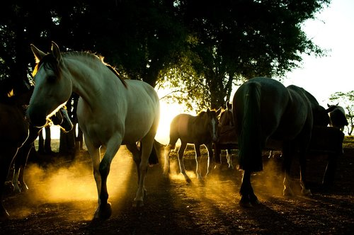 rodeo  farm  rural