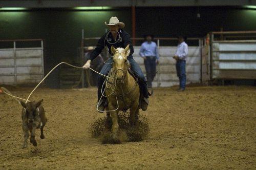 rodeo calf roping
