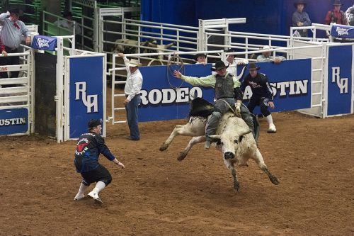 rodeo cowboy bull