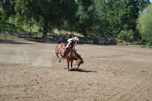 rodeo riding cowboy