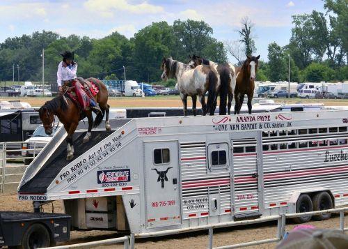 rodeo cowboys horses
