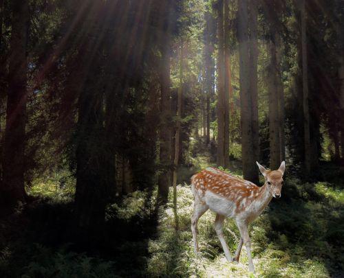 roe deer forest mysticism