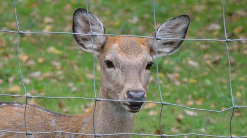 roe deer nature animal enclosures