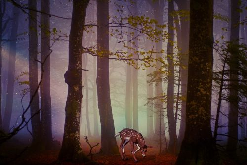 roe deer fawn forest