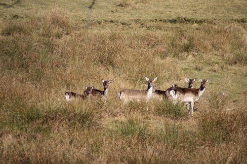 roe deer animals wild