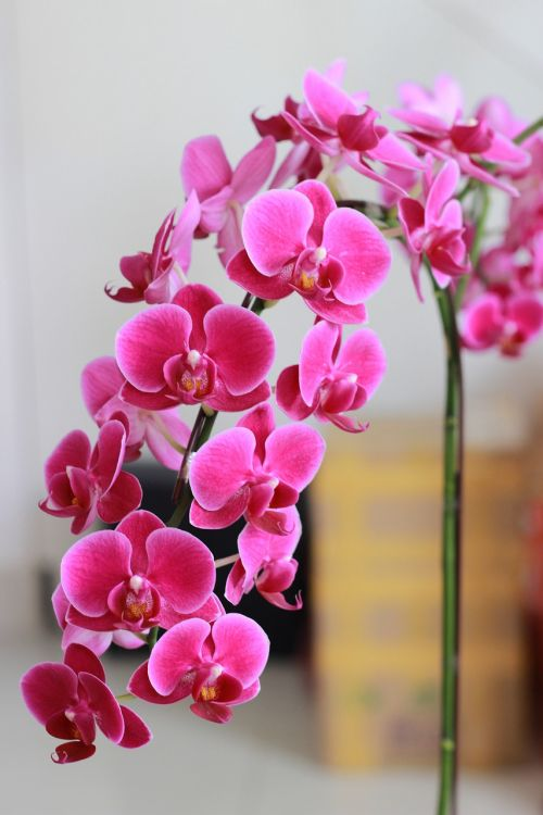 rolling purple flowers purple orchid