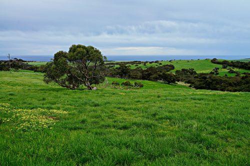 rolling meadows green fields wide open spaces