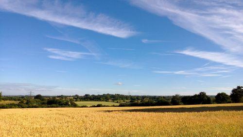Rolling Scenery In Kent