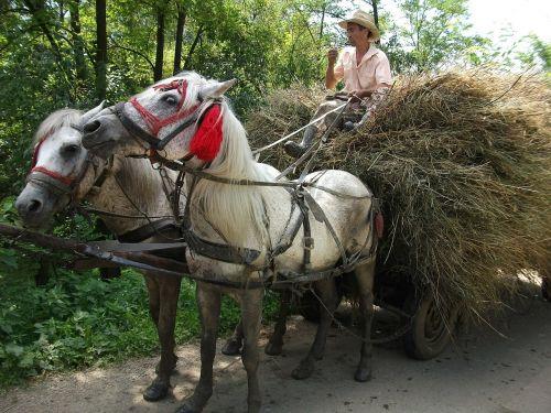 romania horses cart