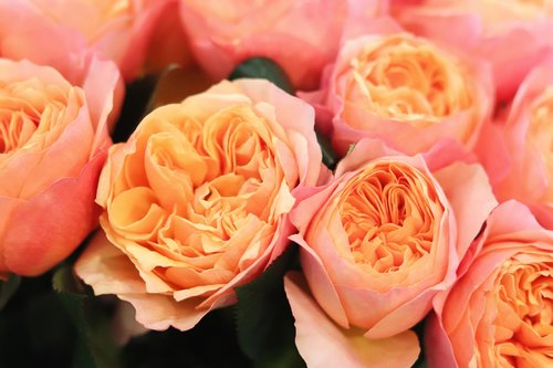 romantic  flowers  beautiful
