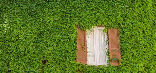rome window green