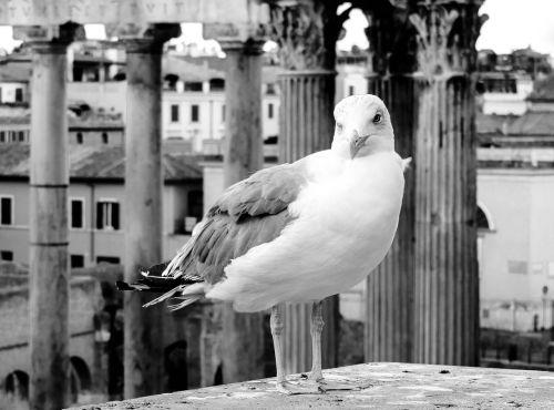 Roma,lazio,italy,miestas,centro,didelis miestas,architektūra,amžinasis miestas,juoda ir balta,skylės,fori imperiali,kajakas,Pirmas aukštas,paukštis,paukščiai,ali,stulpeliai,kolonada,snapas,melancholija