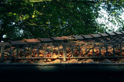 roof tree sun