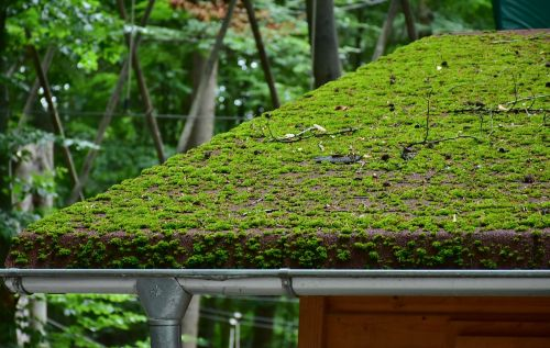 roof brick moss