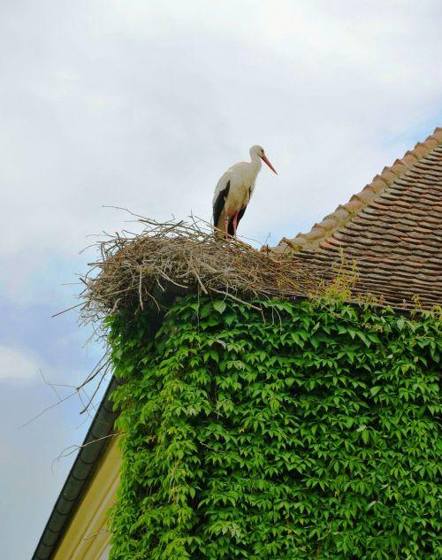 roof ivy bird on roof