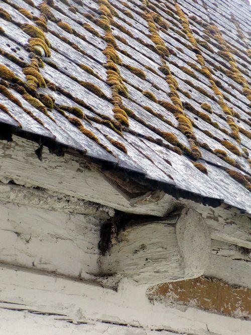 roof moss beam