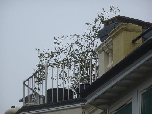 Rooftop Balcony Garden