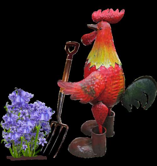 rooster digging flower
