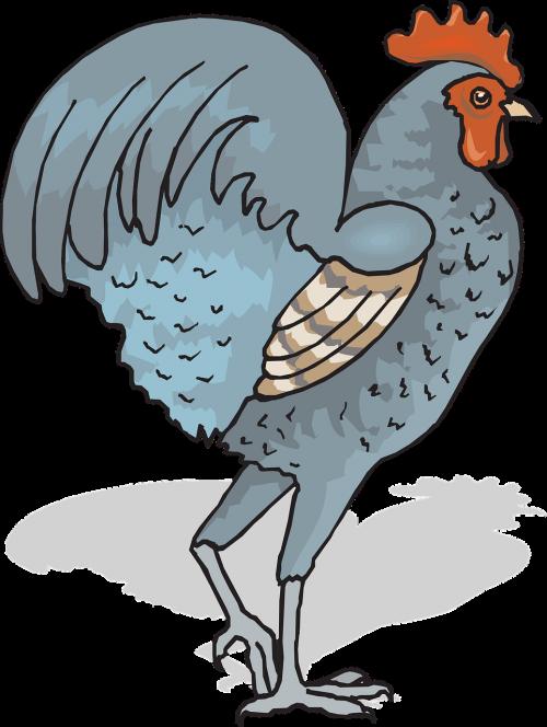 rooster cockerel cock