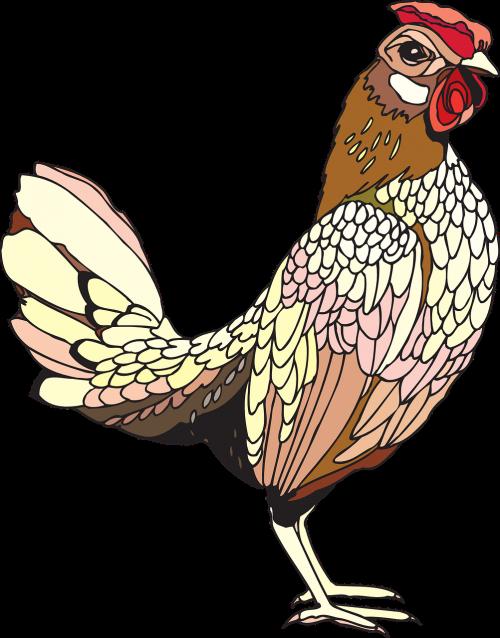 rooster cock cockerel