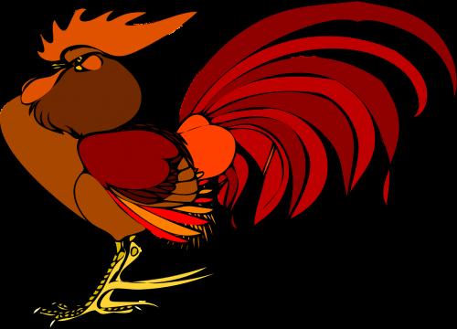 rooster chicken bird