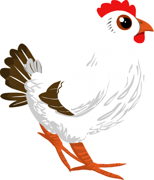 rooster cock poultry