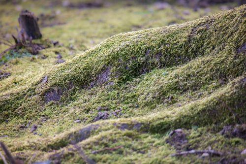 root moss tree