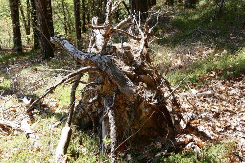 root tree tree root