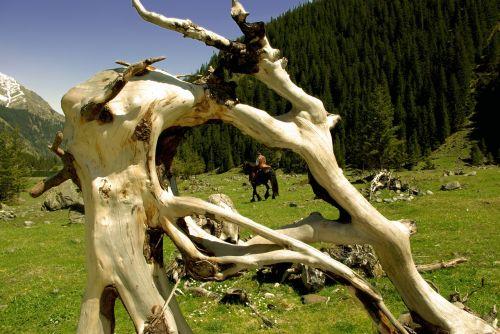 root reiter nature