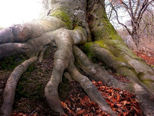 root tree nature