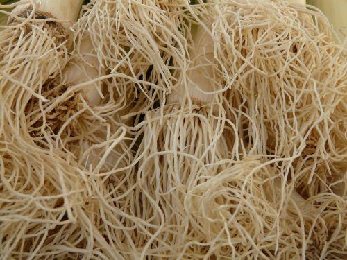 root leek vegetables