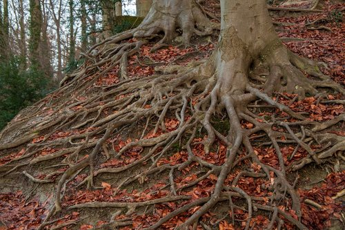 root system  root  tree